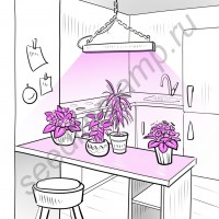 """Биколорная лампа """"Денеб"""" для выращивания растений на мощных 10Вт(20Вт, 30Вт) красных и синих светодиодах"""